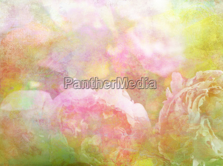 pastel colored bright summer flowers