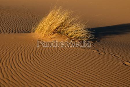 desierto africa sudafrica duna prado hierba