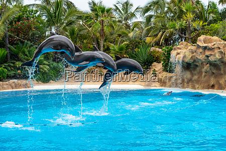 un grupo de delfines mulares atlanticos