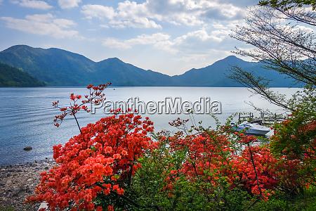 red flowers around chuzenji lake nikko