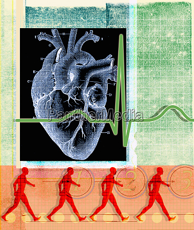 human heart and pulse trace with
