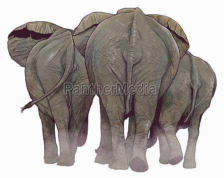 vista trasera de elefantes que se