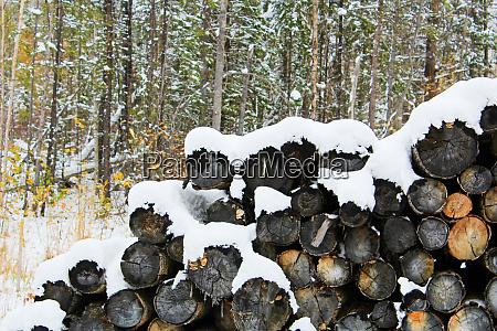 pila de troncos cubiertos de nieve