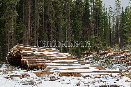 pilas de madera cortada listas para