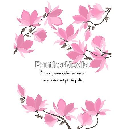 vector magnolia flores