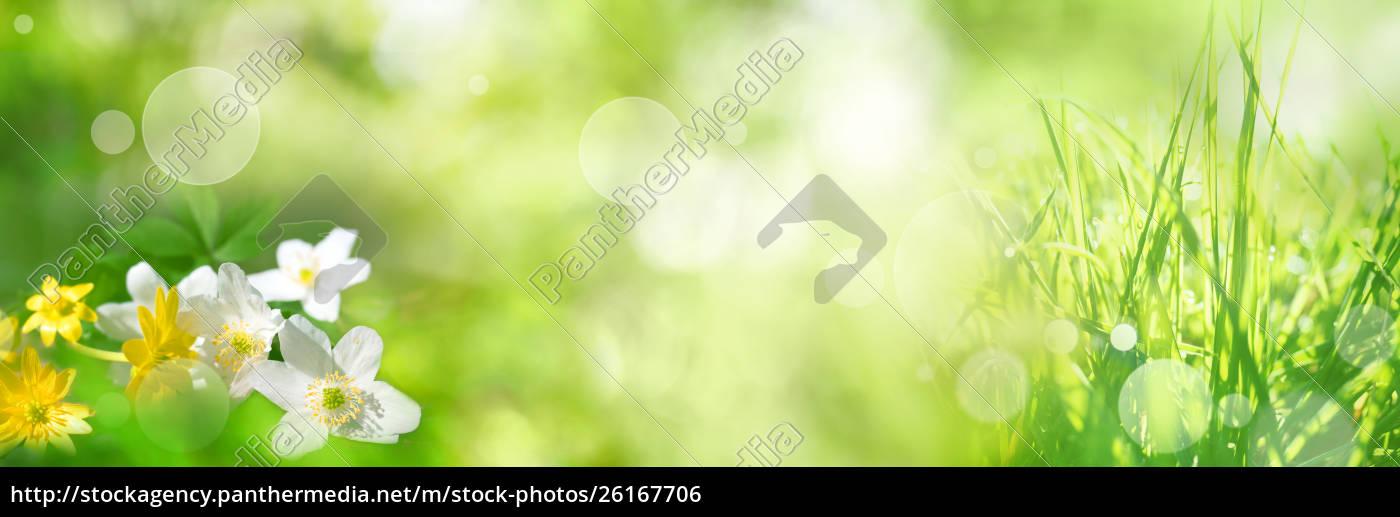 paisaje, de, primavera, verde, brillante - 26167706