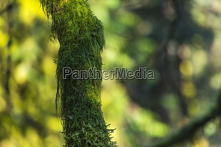tronco de arbol criado en musgo