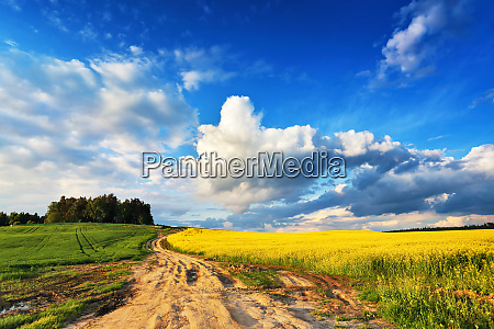 spring scene dirt road into yellow