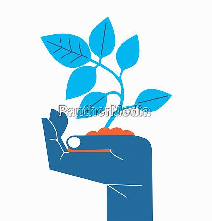 la mano sosteniendo la plantula