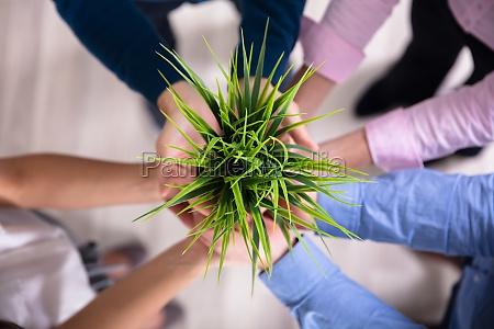 empresarios que sostienen la planta verde
