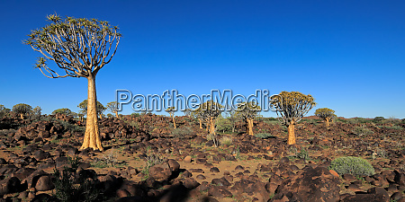 paisaje panoramico de arboles de temblor