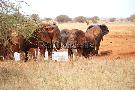 group of elephants at a water