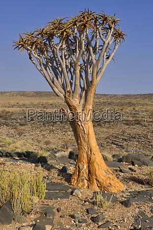 africa namibia las montanyas de namib