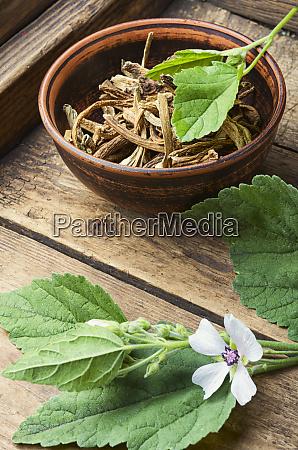 planta medicinal althaea