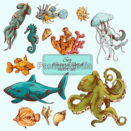 peces marinos y criaturas oceanicas esbozan