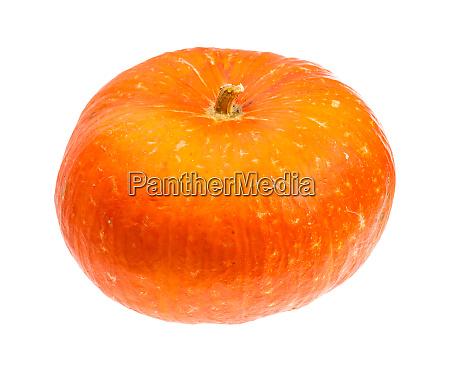 single ripe orange pumpkin isolated on