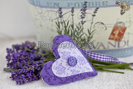 purple fragrant lavender blossom still life