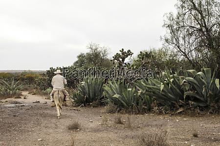 man riding a donkey san miguel