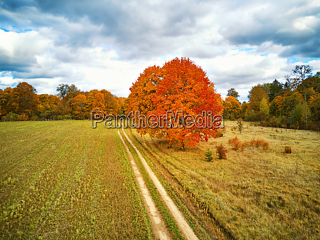 park with red maples trees agriculture
