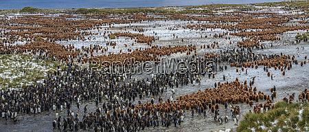 vista aerea de los pinguinos de