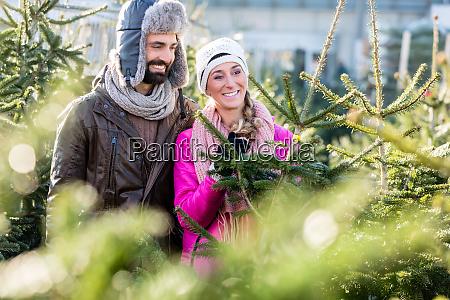 pareja comprando arbol de navidad en
