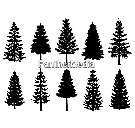 pine fir trees collection