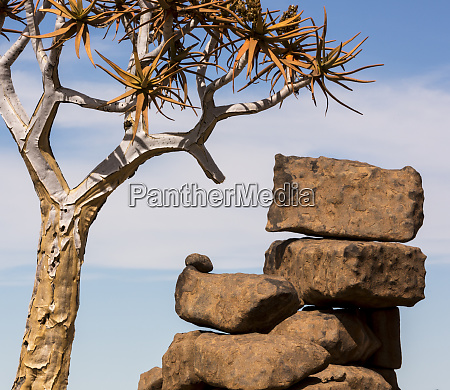 africa namibia boulders and quiver tree