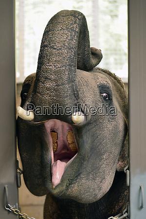 usa oregon portland elephant with mouth
