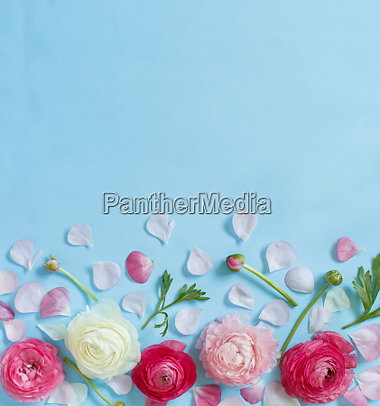 pink flowers on a light blue