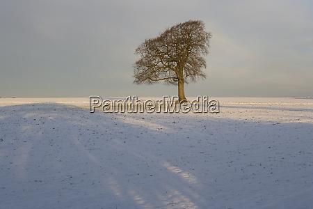 winter tree gloucestershire inglaterra reino unido