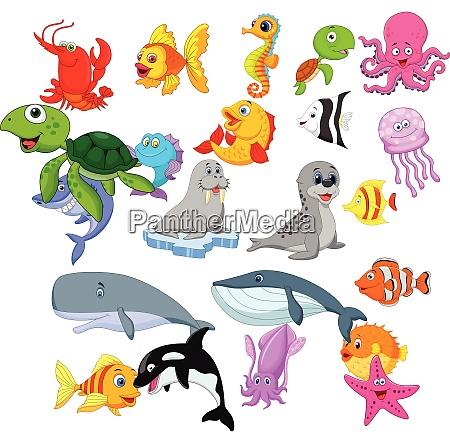 conjunto de colecciones de vida marina