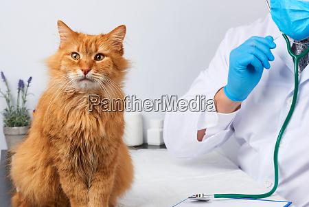 veterinario masculino en una bata medica