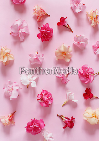 pink flowers on a pink background