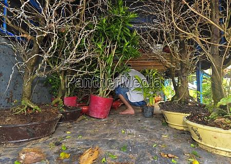 la, cultura, bonsái, en, vietnam - 28846625