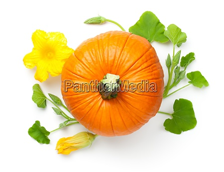 pumpkin, vegetable, with, yellow, flower - 28869197