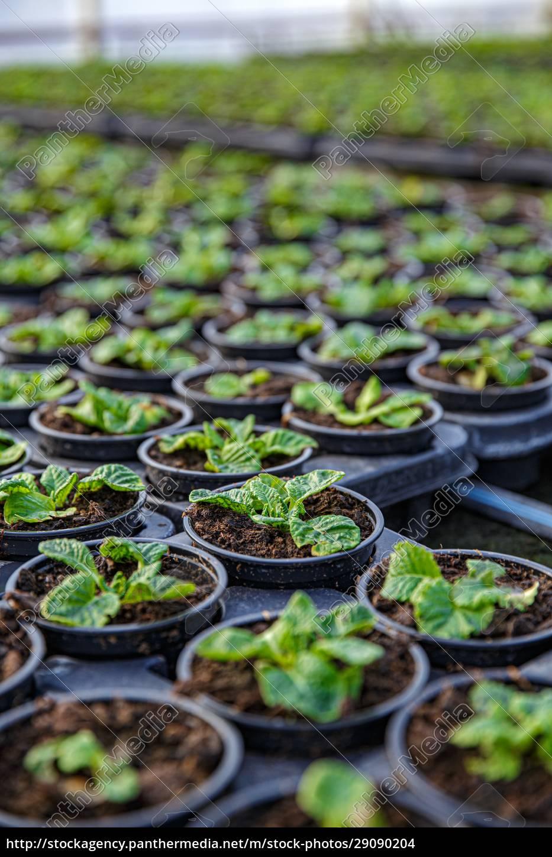 flower, production, line - 29090204