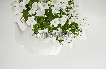 flores de campana en una tetera