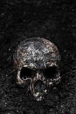 craneo en suelo humedo con lombriz