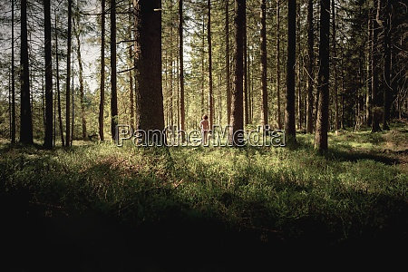 ID de imagen 29123552