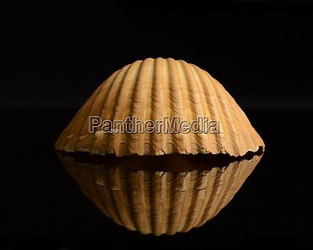 la, vida, fija, de, las, conchas - 29214554