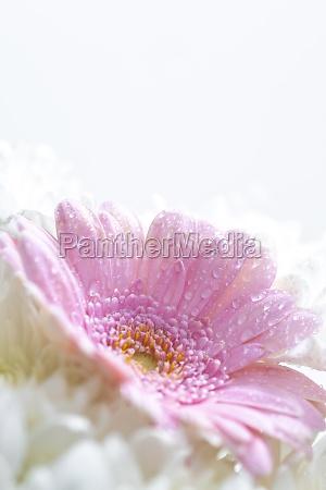 bodegon de flores sobre fondo blanco