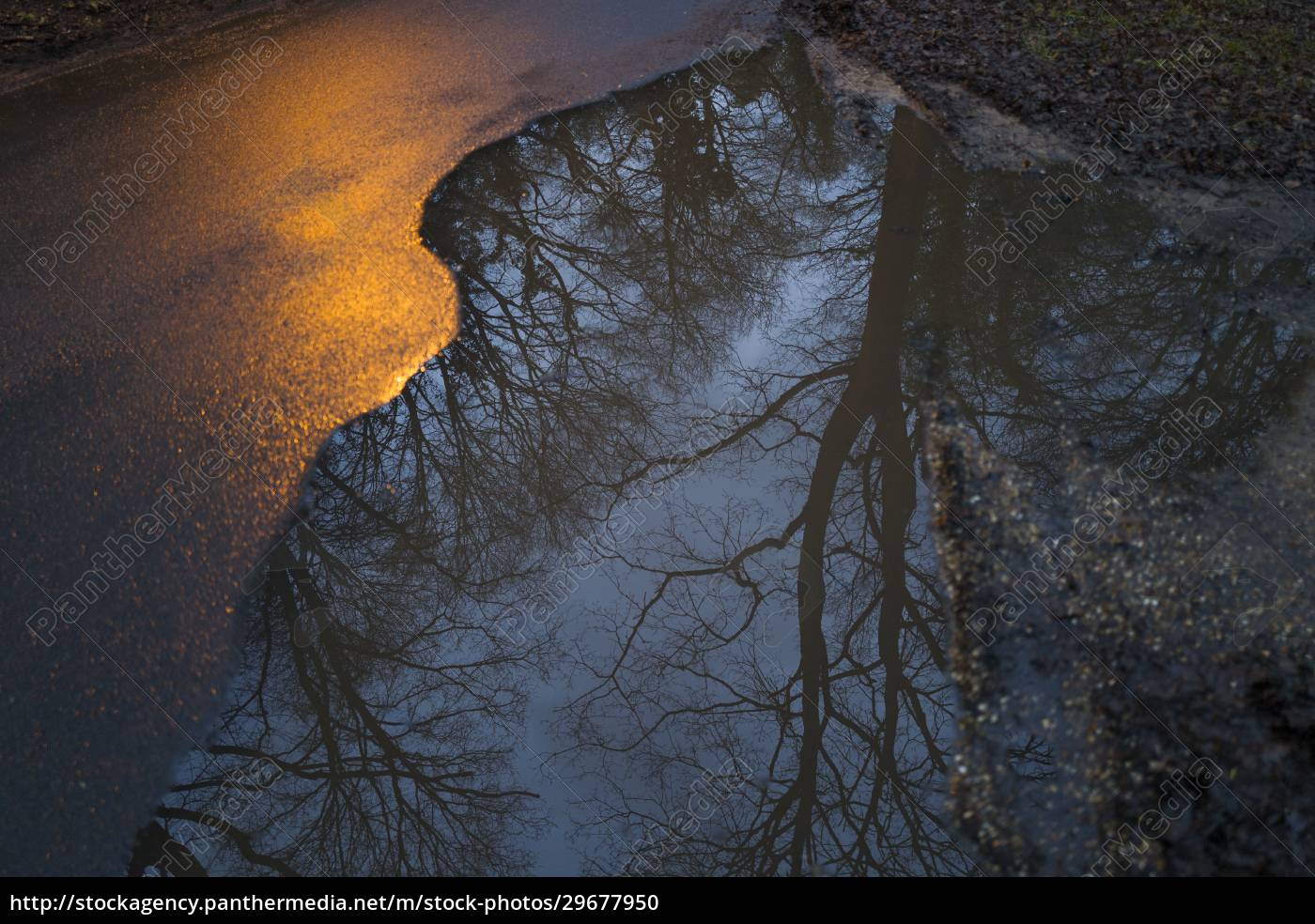 reflection, of, trees, in, roadside, puddle - 29677950