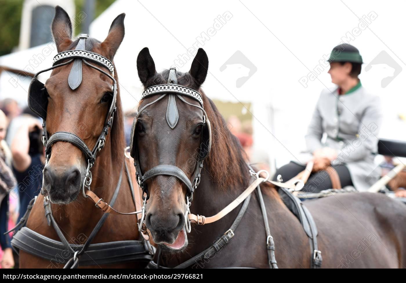 ein, pferdegespann, beim, bauernmarkt, in, mondsee, - 29766821