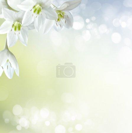 ID de imagen B21507809