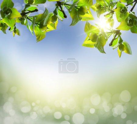 ID de imagen B23671259