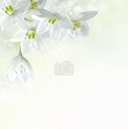 ID de imagen B21486037