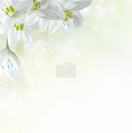 ID de imagen B21507811