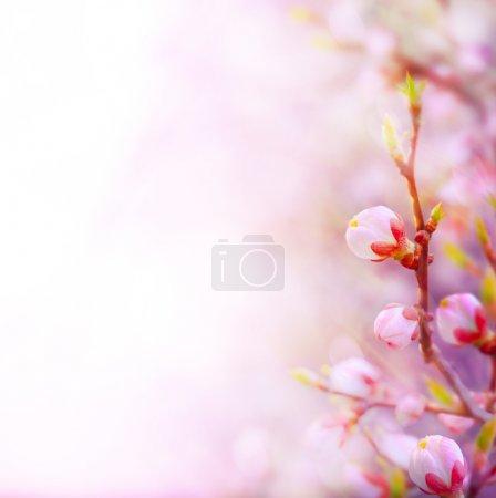 ID de imagen B20394799
